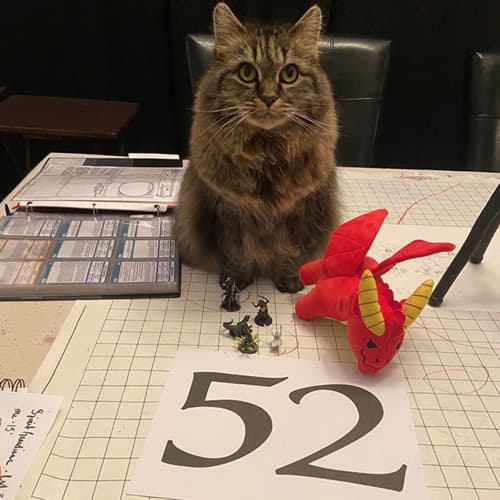 Maine Coon Cat On D&D map with number 52 on paper