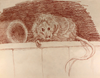 Rat on crate sketch